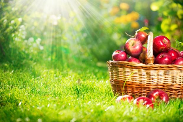 Äpfel im Korb | © Bildagentur PantherMedia / Subbotina