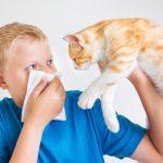 Haustier trotz Allergie |© panthermedia.net / Genika